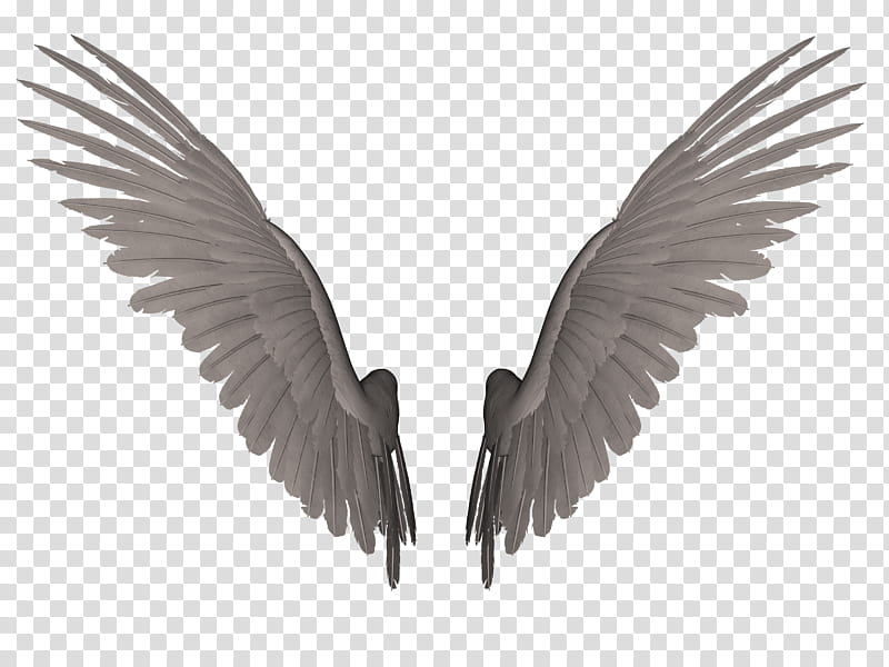 Wing clipart feather wing. Feathered wings a pair