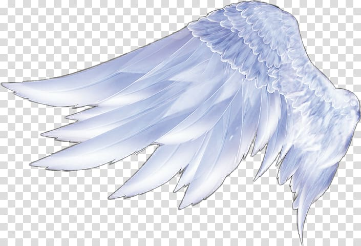 Wing clipart feather wing. Angel wings transparent