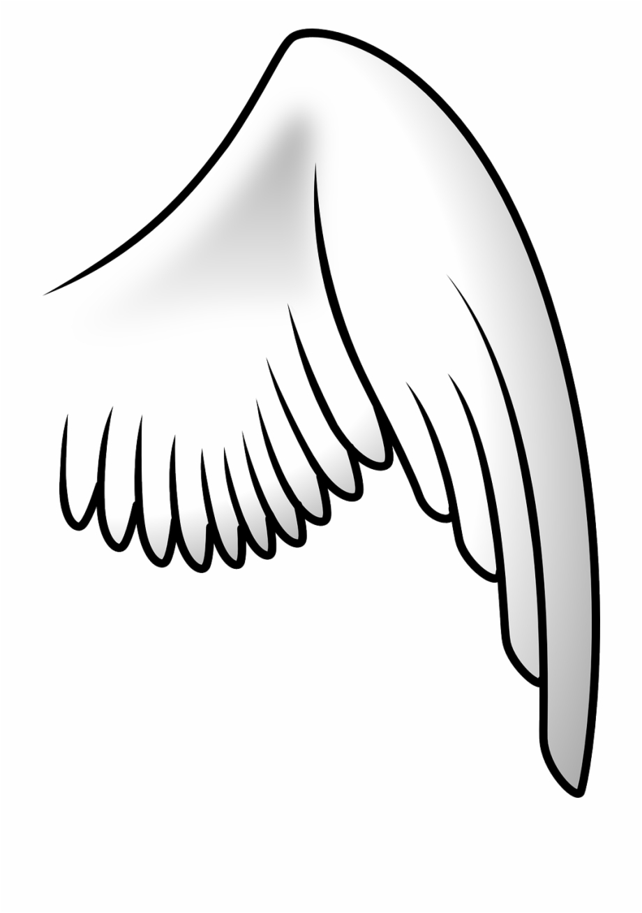 Bird angel png image. Wing clipart flying