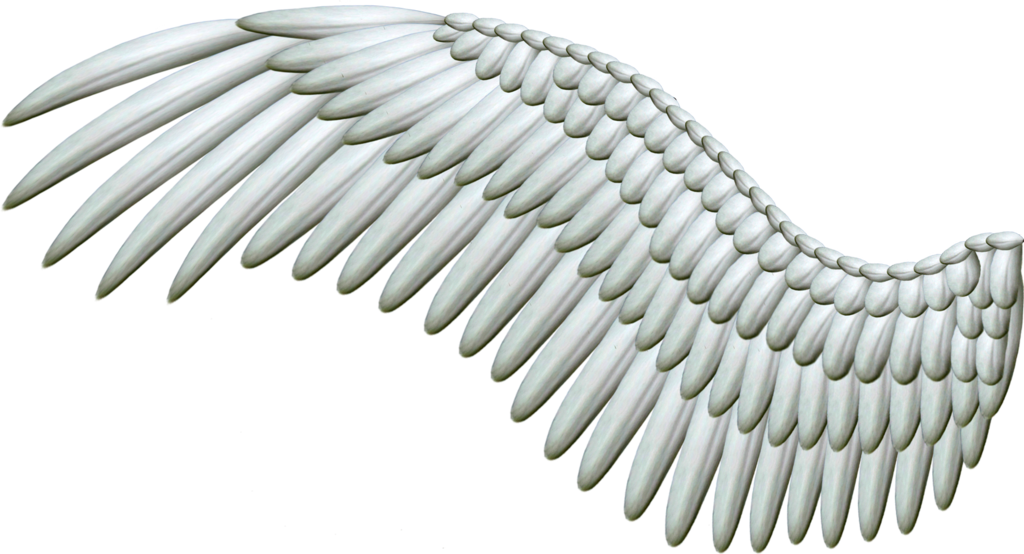 Wings transparent png pictures. Wing clipart one wing