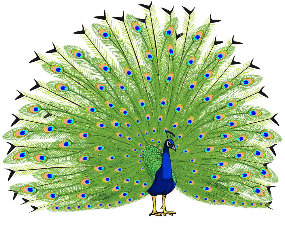 In my own words. Wing clipart peacock