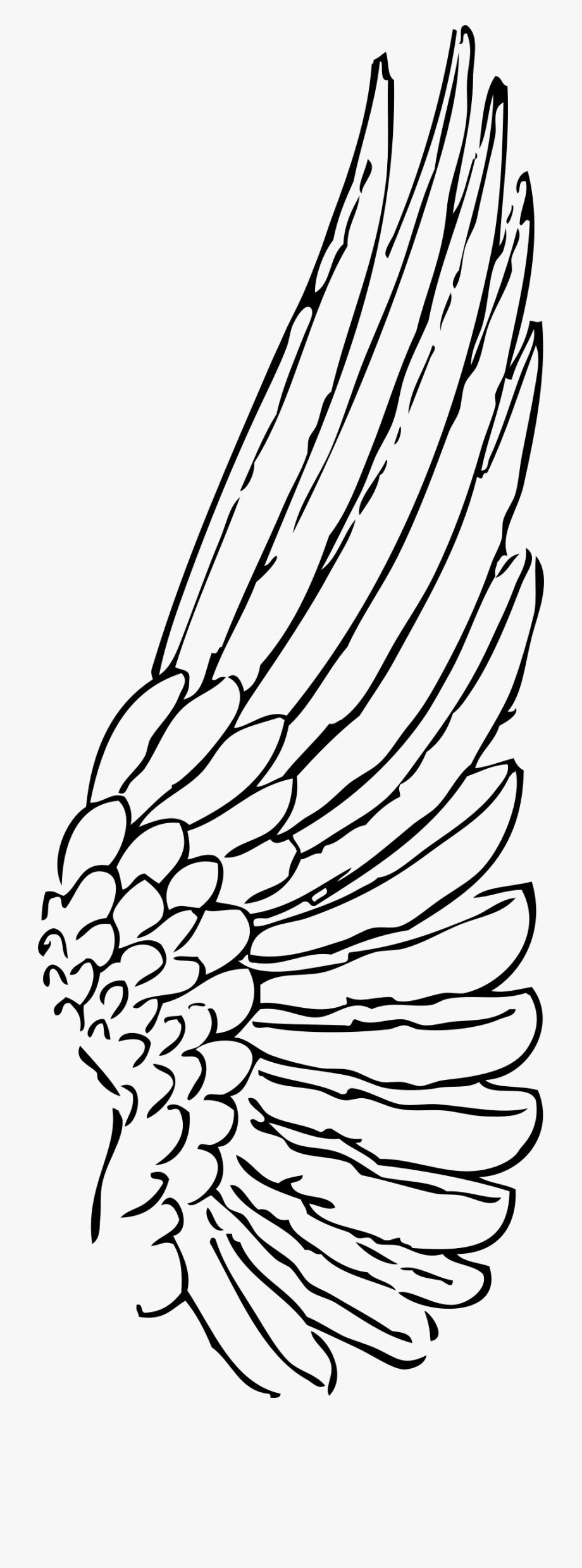 Wing clipart single. Outline feather angel