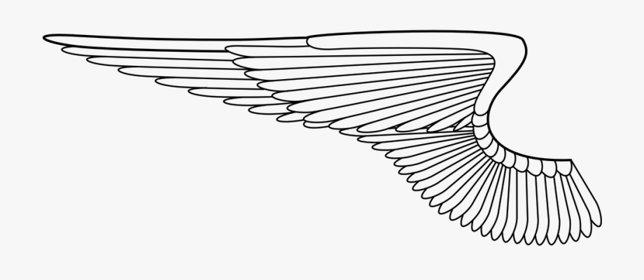 Angels wings png free. Wing clipart single