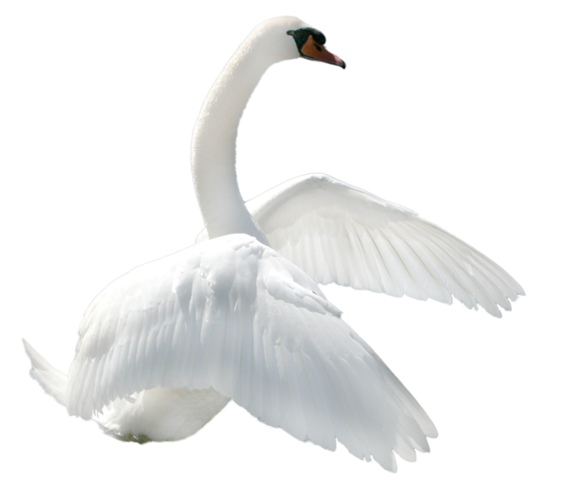Png images free download. Wing clipart swan