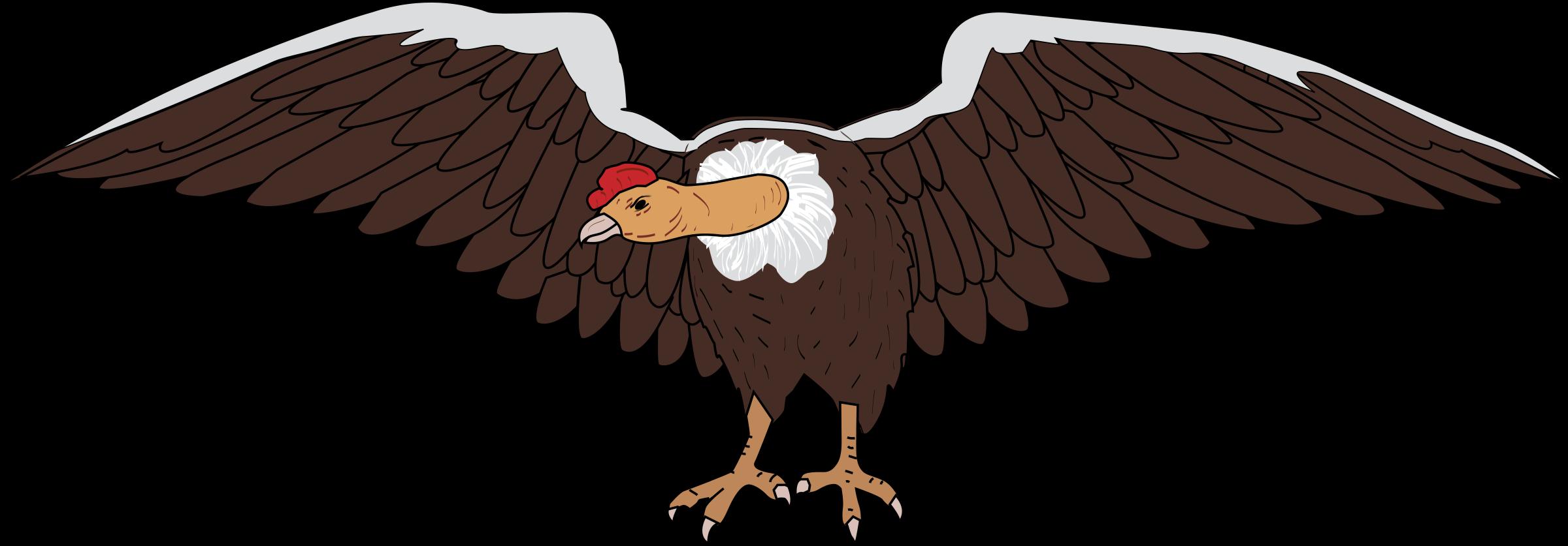 Wing clipart vulture. Condor big image png