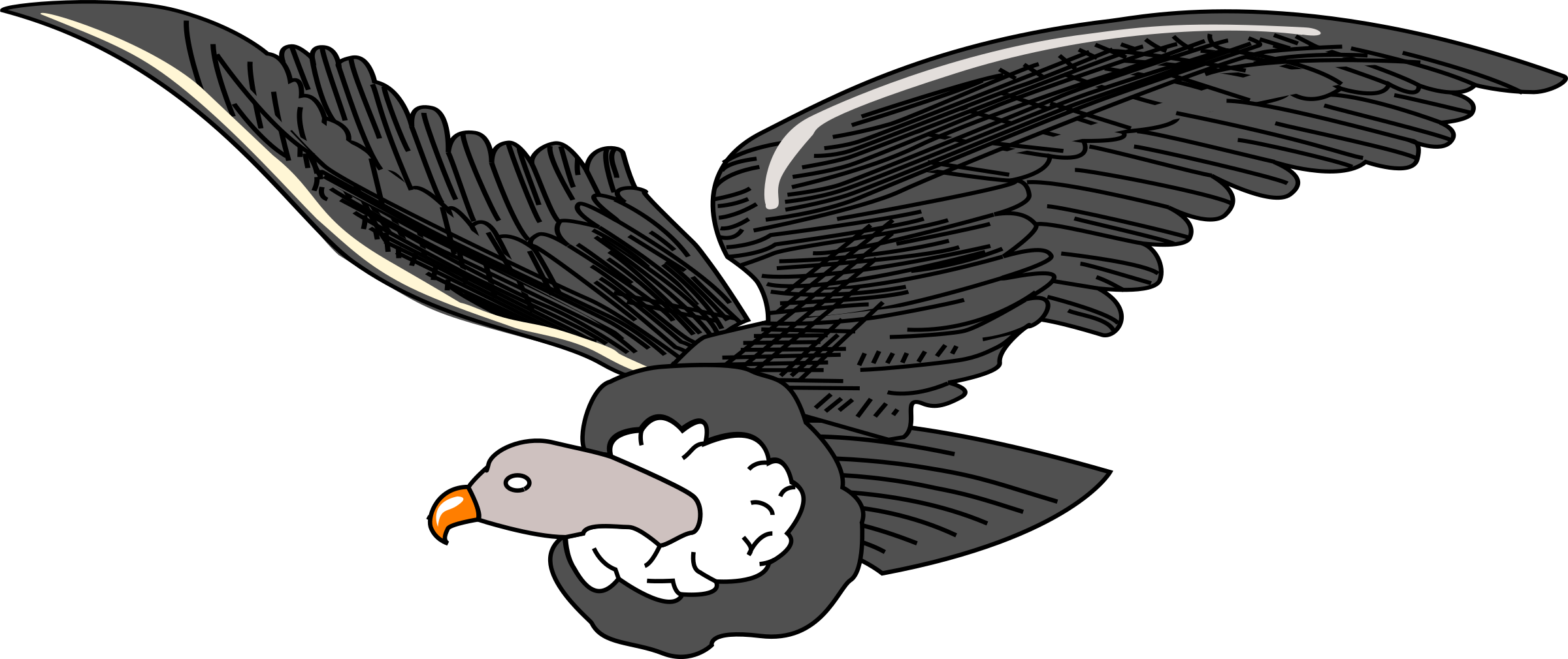 Wing clipart vulture. Bird condor clip art