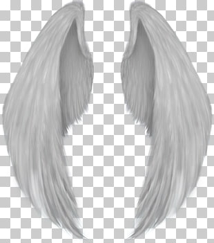 Wings paintings search result. Wing clipart wing hd