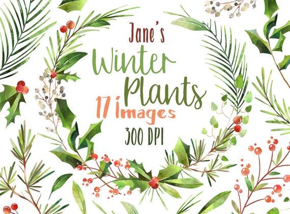 Winter clipart plant. Watercolor plants christmas wreath