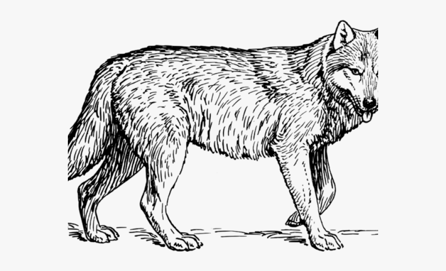 Wolf clipart black and white. Gray profile