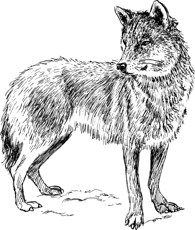 Transparent free png azpng. Wolf clipart carnivore