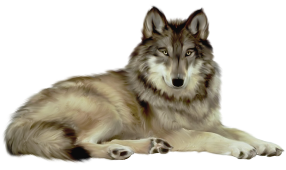 Wolf clipart clear background. Transparent animal animals images