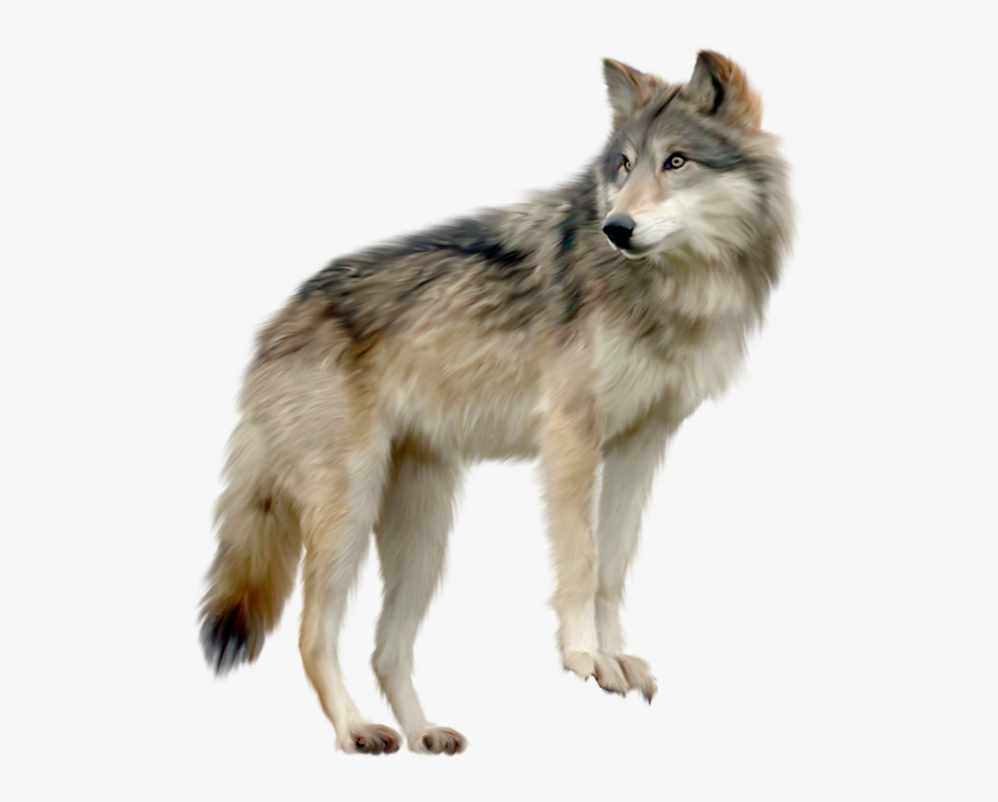 Cartoon wolf image . Wolves clipart transparent background
