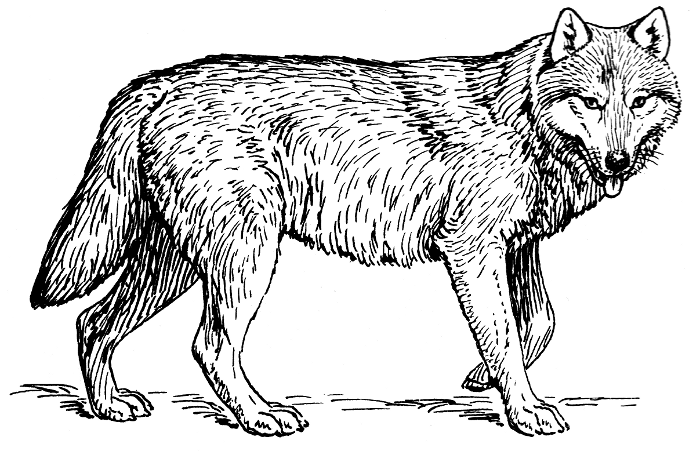 Free wolf page of. Wolves clipart clip art