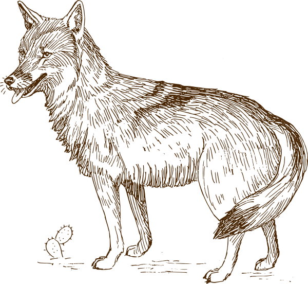 Wolves clipart clip art. Wolf at clker com