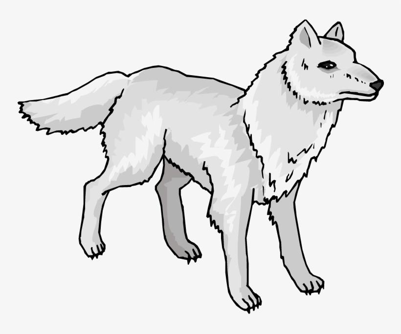 Head arctic wolf pencil. Wolves clipart color