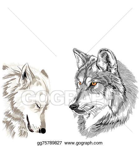 Vector art muzzles sketch. Wolves clipart couple