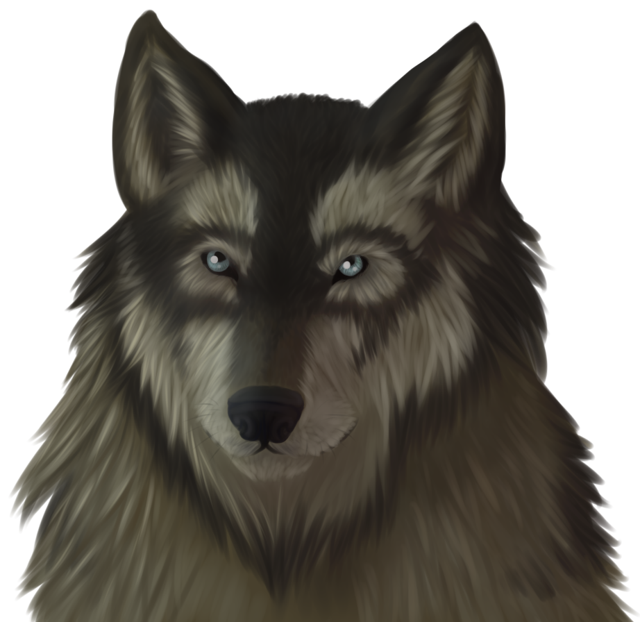 View drawing at getdrawings. Wolf clipart front
