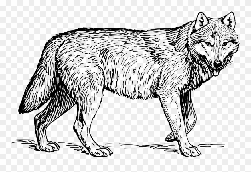 Animal black and white. Wolf clipart gray wolf
