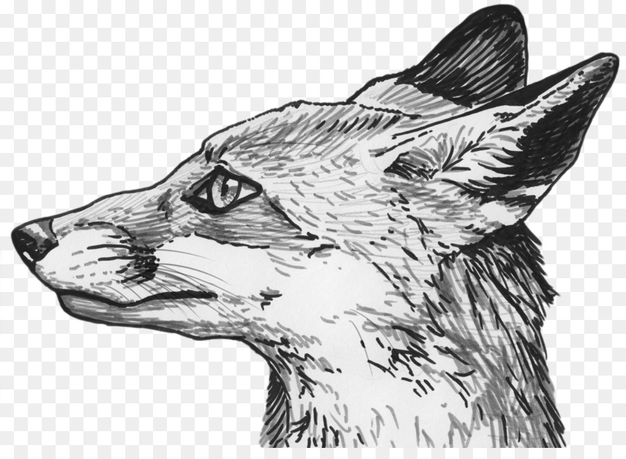Drawing cat transparent clip. Wolf clipart grey fox