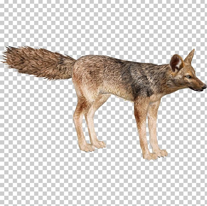 Wolf clipart grey fox. Jackal coyote red portable
