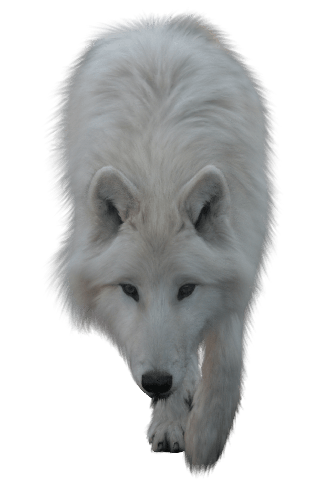 Wolves clipart native american wolf. White transparent png stickpng