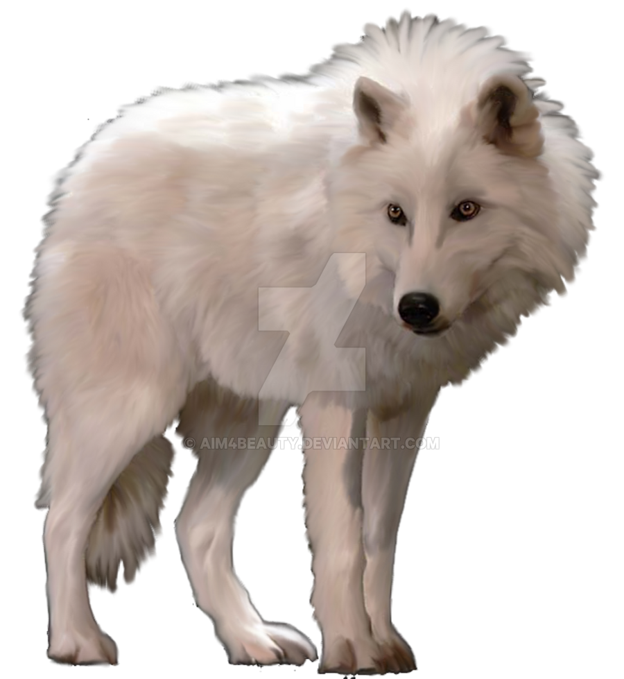 collection of wolf. Wolves clipart polar fox