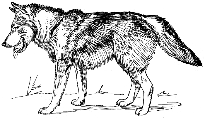 Free page of clip. Wolf clipart public domain