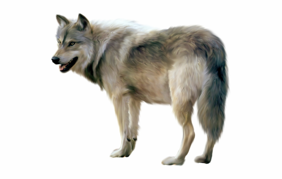 Download png transparent images. Wolf clipart realistic