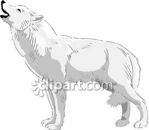 Howling royalty free picture. Wolf clipart realistic