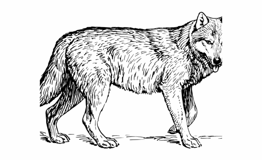 Wolf clipart realistic. Coyote howl coloring pages