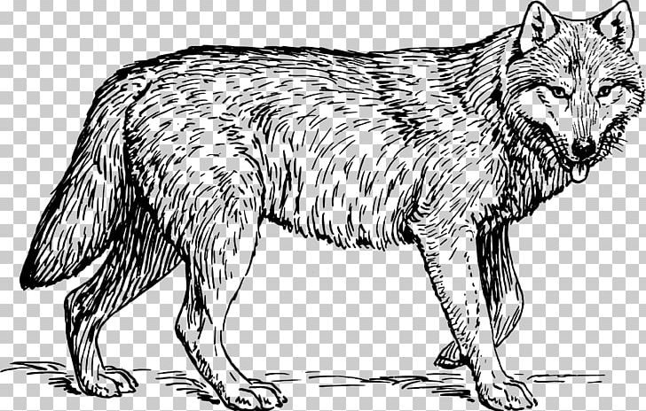 Coloring book horse lion. Wolf clipart tiger
