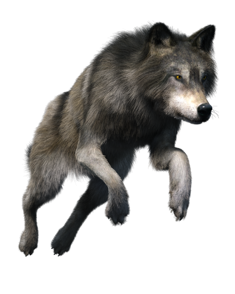 Copyright free images gallery. Wolf clipart translucent