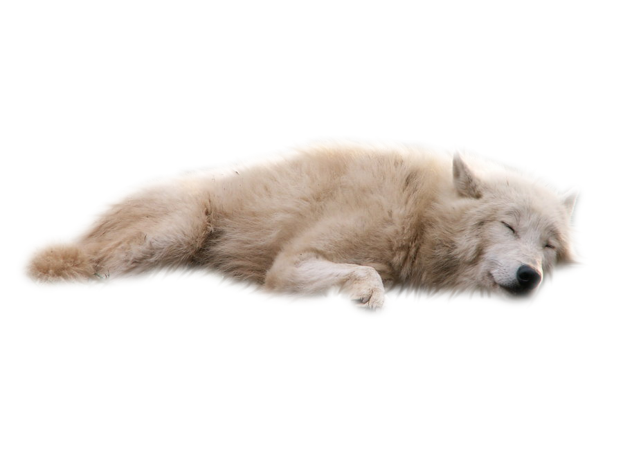 Wolves white png mart. Wolf clipart transparent background