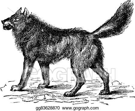 Wolf clipart vintage. Vector illustration eurasian or
