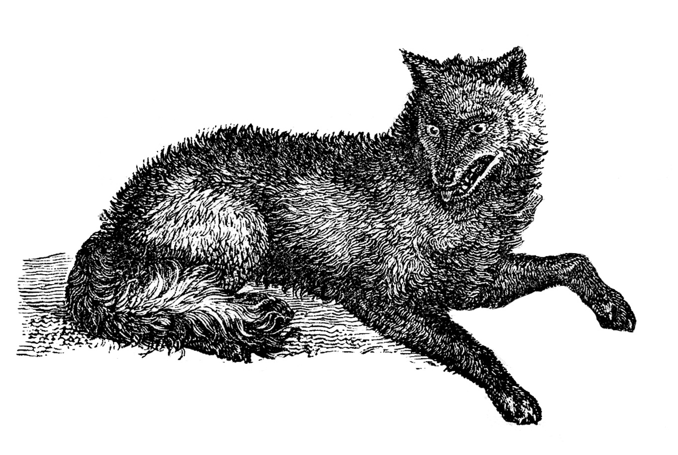 Clip art wolves cliparting. Wolf clipart vintage