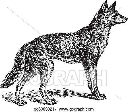 Wolf clipart vintage. Eps illustration gray or