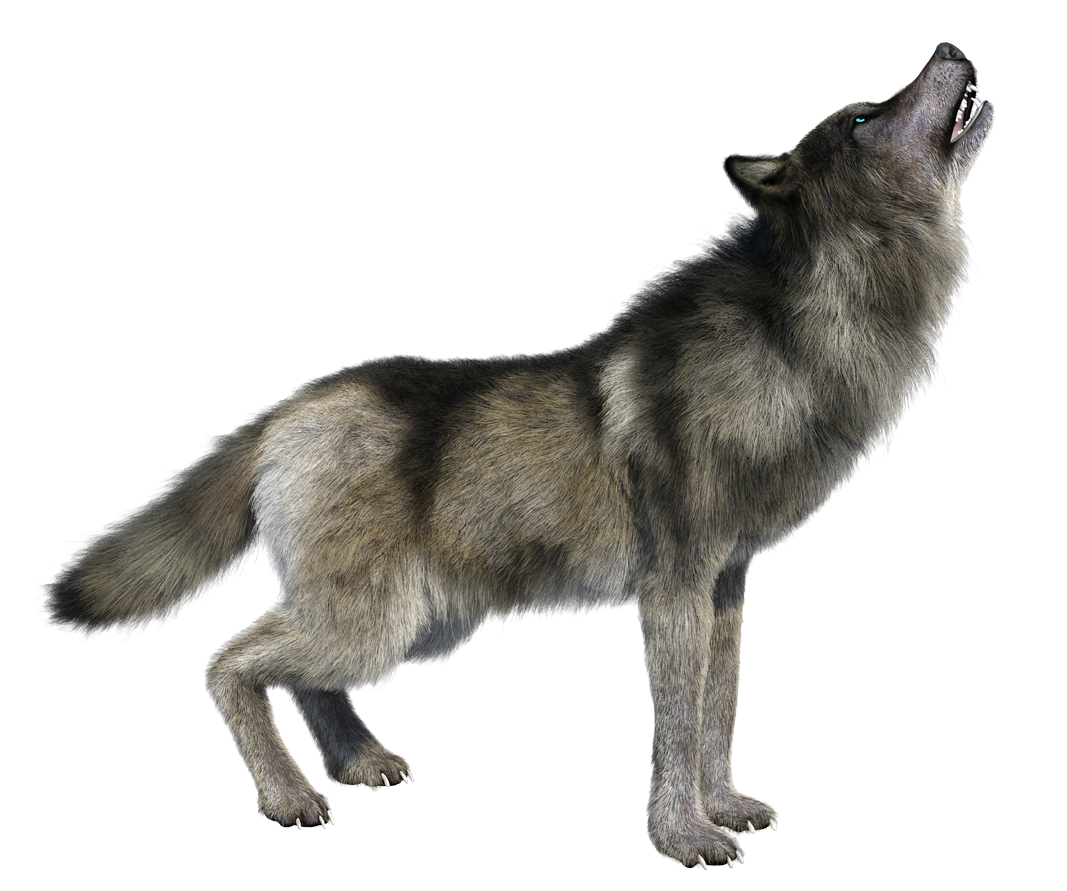 Howling hd image transparent. Wolf png images