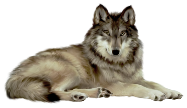 Image free picture download. Wolf png images