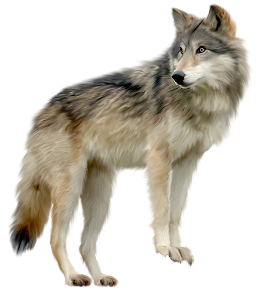 Wolf a d o. Woodland clipart gray fox