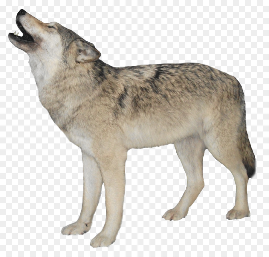 Wolves clipart clear background. Wolf cartoon wildlife transparent