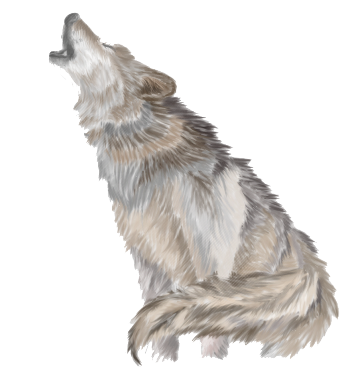 Clip art howl png. Wolves clipart gray wolf