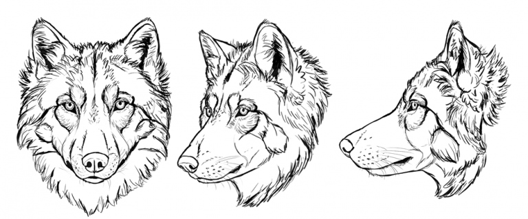 How to draw drawing. Wolves clipart line