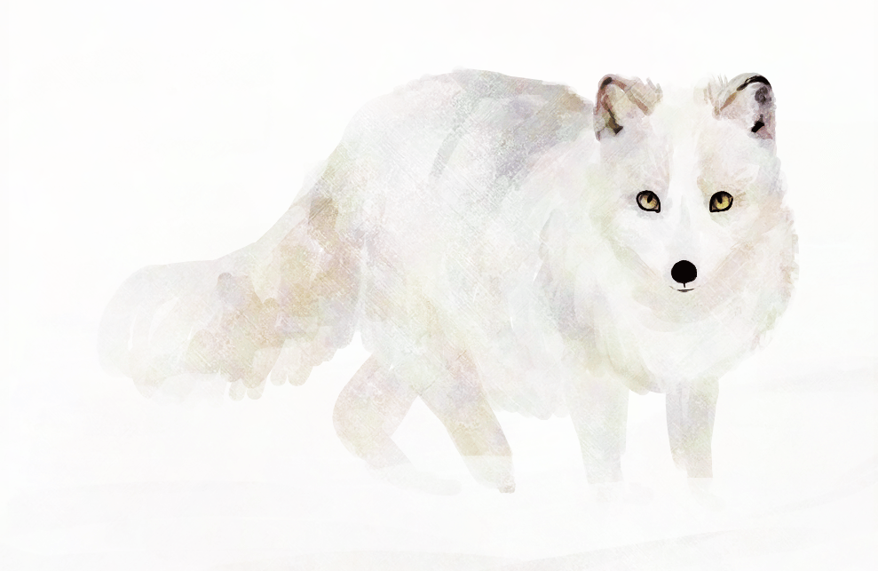 Free arctic wolf download. Wolves clipart polar fox