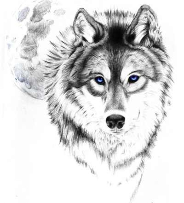 Free wolf outline download. Wolves clipart realistic