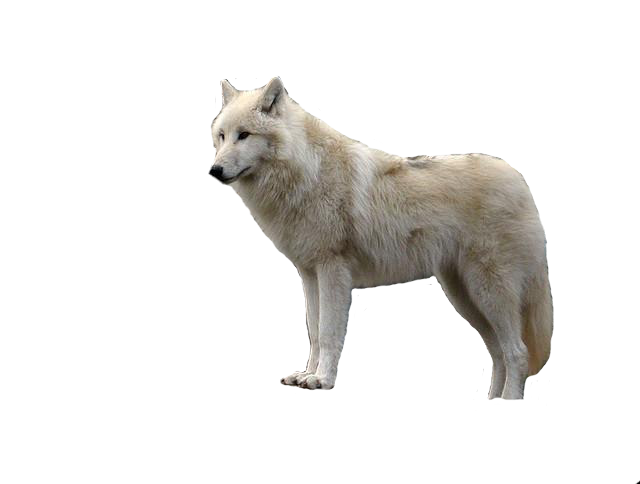 Wolf clipart translucent. White with transparent png