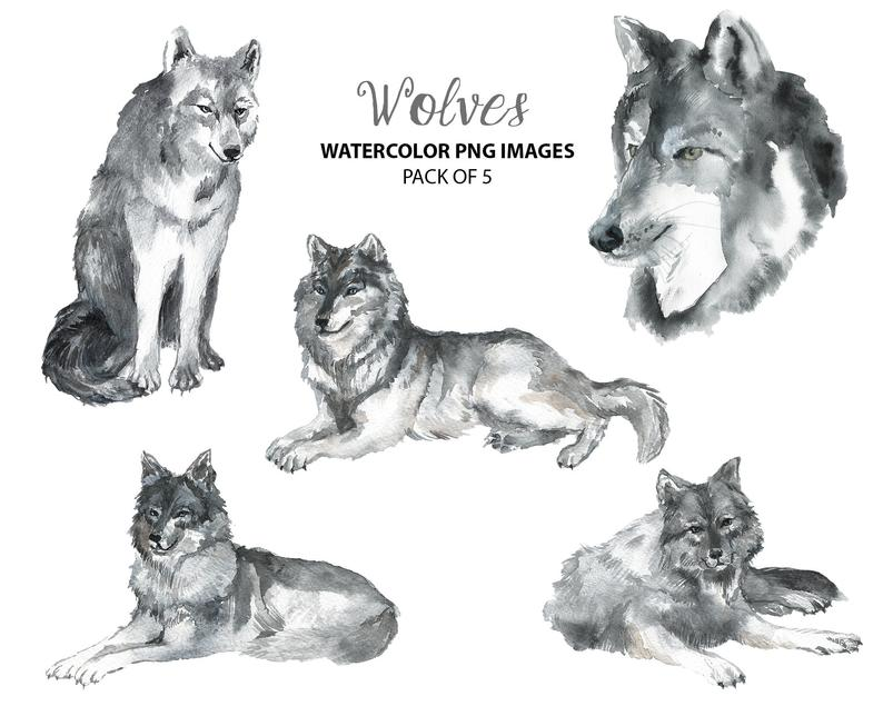Wolf woodland nursery illustration. Wolves clipart watercolor