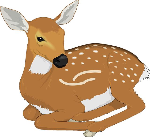 Woodland clipart fawn.  cauprimnue pinterest deer