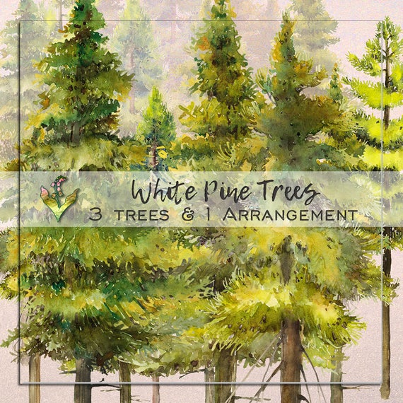 Woodland clipart fine tree. Handpainted watercolor png forest
