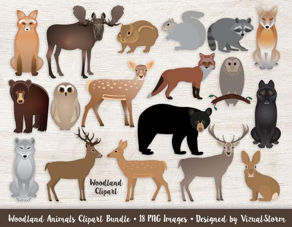 Woodland clipart forrest animal. Animals bundle forest graphics