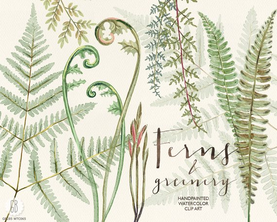 Watercolor ferns hand painted. Woodland clipart green fern
